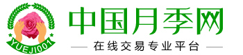 中国月季网